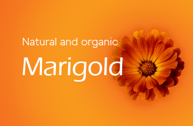 marigold_eng